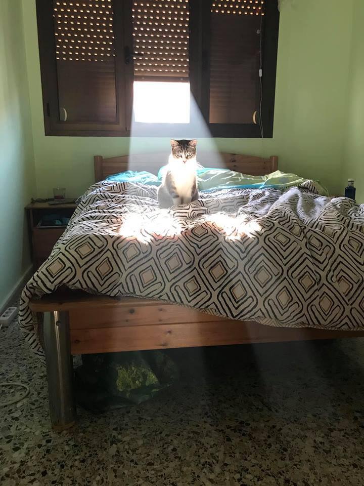 光が差し込む猫